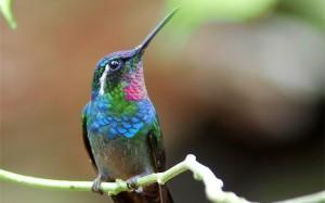 Saving Endangered Species Around the World