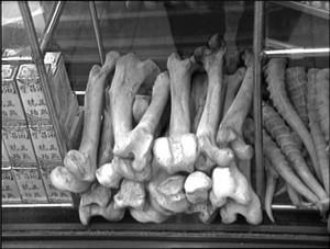 Tiger bone
