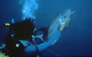 Flipper Fund = Dolphin Saving