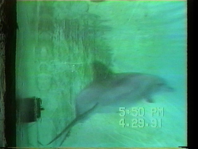 Project Delphis : Earthtrust's dolphin behavior and cognition research program.