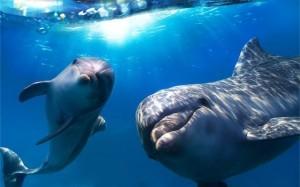 Flipper Fund Saves Dolphins