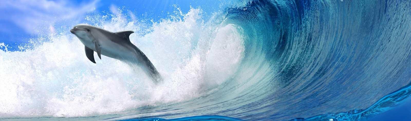 dolphinsurfcrop_33_71335912