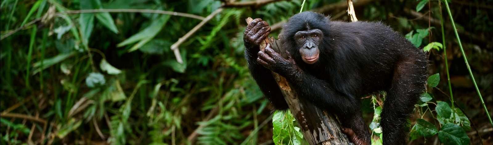 bonobopan_30_60688354