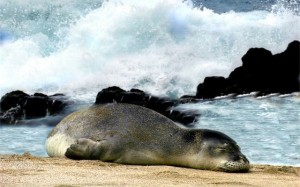Monk Seal Campaign