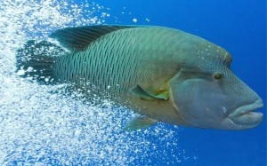 Saving your Wrasses