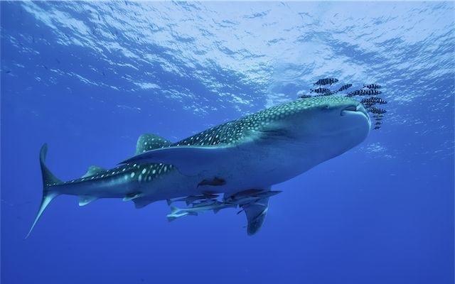 Image of: Wildlife Endangered Marine Species Earth Trust Endangered Marine Species Endangered Wildlife