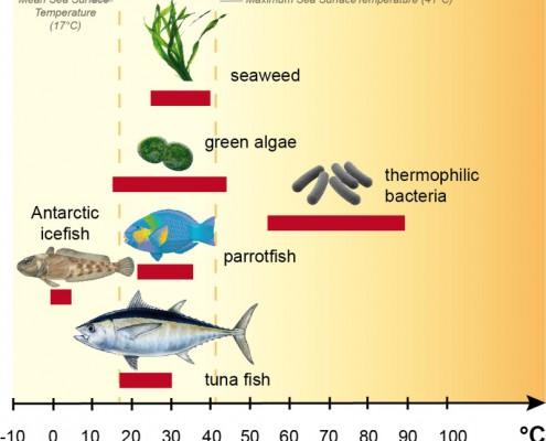 fishtemps