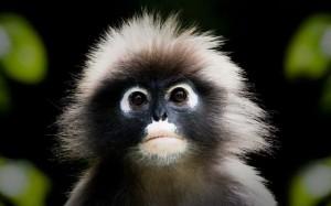 monkey_65569054_640400