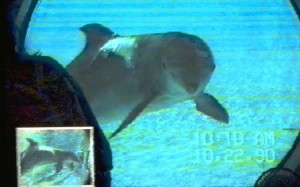 dolphinSelfAware640400