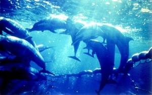 dolphinspurseseing640400