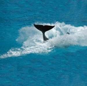 whale300test